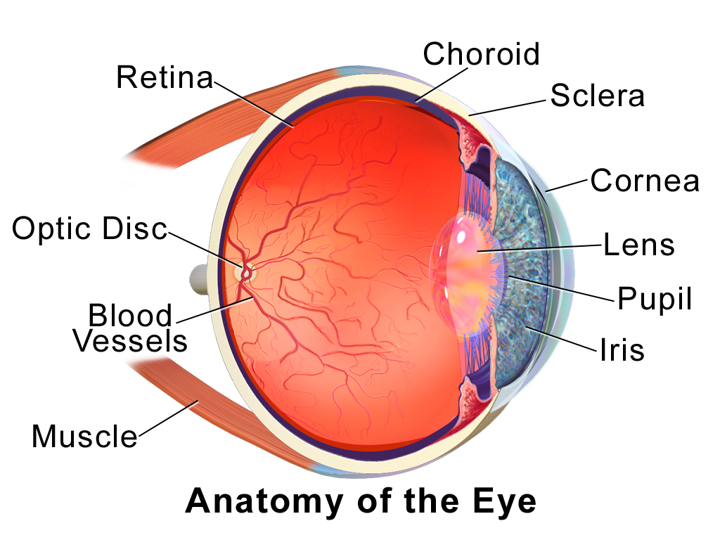 eye_anatomy_001